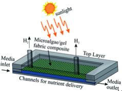 biohydrogen - scheme